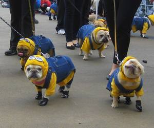 dog, minions, and funny image