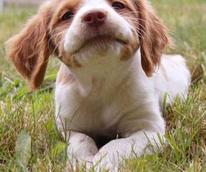 cute animals, puppy, and dogs image