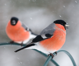 beautiful, nature, and birds image