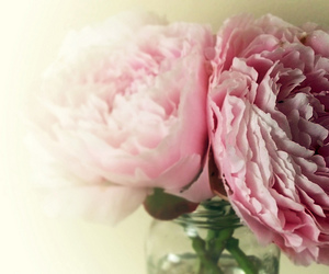 peonies and flowers image