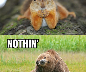 funny, squirrel, and cute image