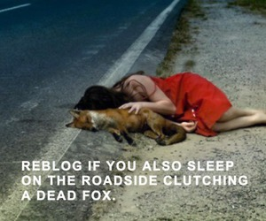 fox and funny image