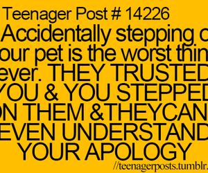 pet, teenager post, and apology image
