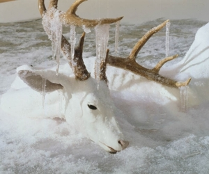 deer, ice, and white image