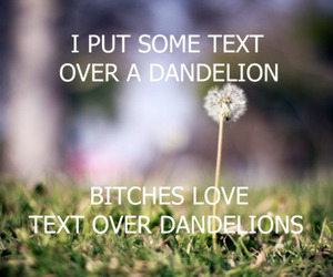 bitch, dandelion, and text image