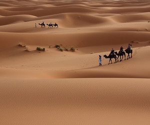 beautiful, sand dunes, and camel image