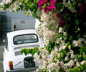 car, white, and flowers image