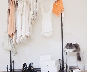 clothes and cat image