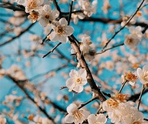 beautiful, blossom, and blue image