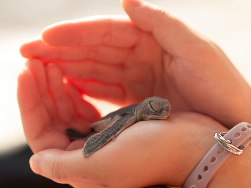 baby turtle, turtles, and cute image