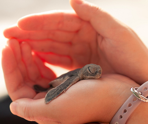 baby turtle, demi lovato, and turtles image