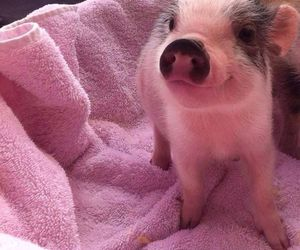 pig, piggy, and pink image