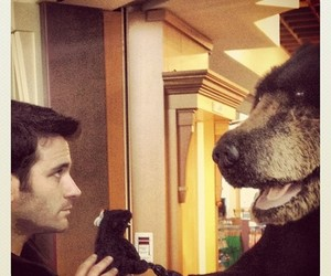 bear and colin donnell image
