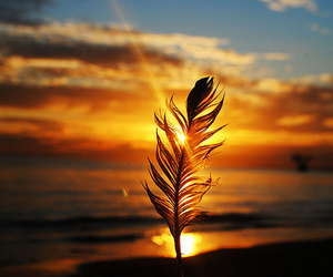 feather, photography, and sunset image