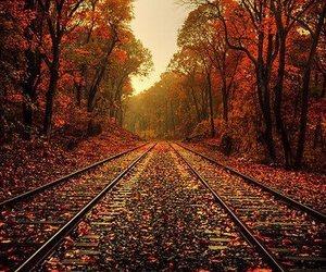 beautiful, tree, and fall image