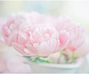 beautiful, flowers, and pastel image