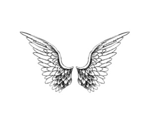 wings, angel, and fly image