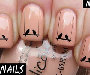 nails and birds image