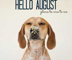 dog and August image