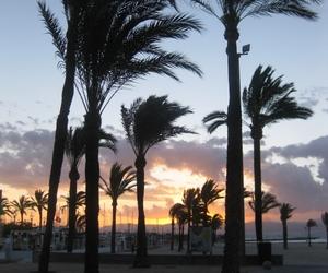 mallorca, palms, and wind image