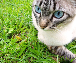 cat, nature, and pretty image