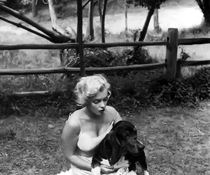 dog and Marilyn Monroe image