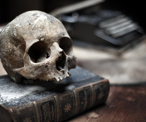 skull and book image