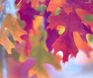 autumn, wind, and beautiful image