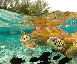 turtle, sea, and water image