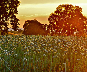 nature, sunset, and linda tanner image