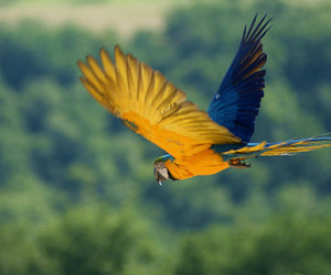 animal, pretty, and parrot image