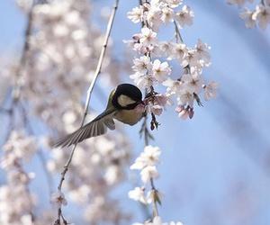 beautiful, bird, and flowers image