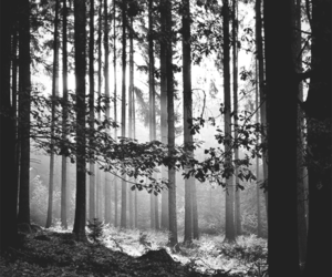 black and white, places, and woods image