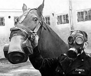 black and white, gas mask, and horse image