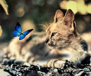 animals, blue, and butterfly image