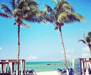 beach, Biarritz, and palm tree image