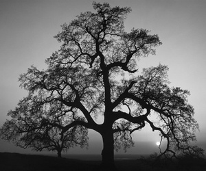 tree and black and white image