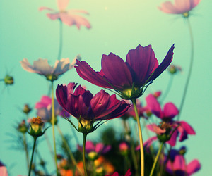flowers, pink, and violet image