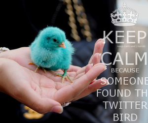 keep calm, twitter, and bird image
