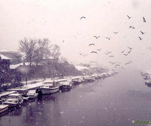 birds, boats, and snow image
