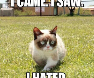 cat and grumpycat image