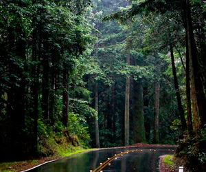 road, forest, and rain image
