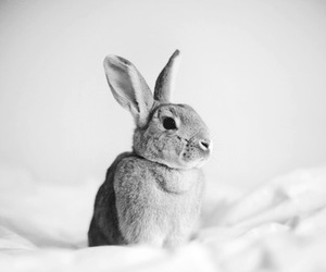 aw, awesome, and b&w image