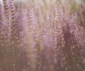 lavender and flowers image