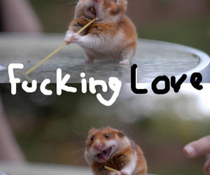 fun, hamster, and typography image