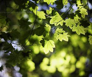 August, beautiful, and bokeh image