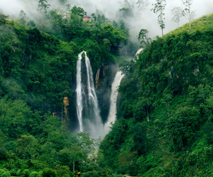 nature, tree, and waterfall image