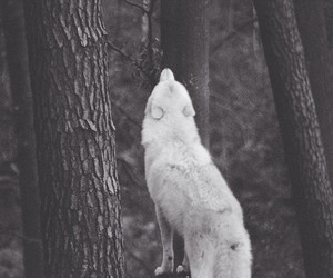 wolf, black and white, and forest image