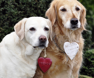 cane, hearts, and perro image