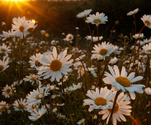 summer, sun, and flowers image